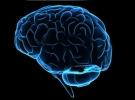 daha, erkeklerden, güçlü, hafızası, kadınların, Orta, Orta yaş kadınların hafızası erkeklerden daha güçlü, yaş