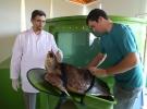 Kaplumbağalar için tam donanımlı hastane